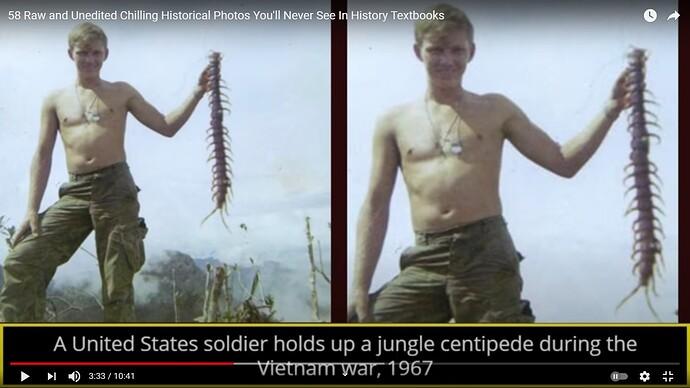Centipede, Jungle