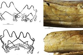 Archaeology: Ancient artwork discovered in Siberia are 'earliest EVER drawings of animals'