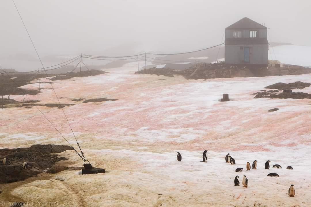 red-green-snow-antarctica
