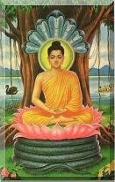 god budhha under banyana tree